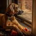 Watchdog  by samae