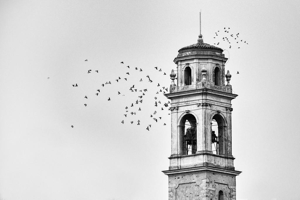 Birds at Borghetto Church by jyokota