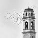Birds at Borghetto Church