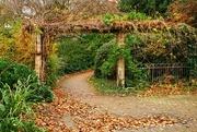 22nd Nov 2019 - Fallen leaves
