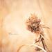 Beauty in Brown by lyndemc