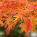 Hello Autumn! by lynne5477