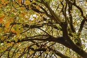 23rd Nov 2019 - Autumn leaves
