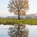 A tree and its reflection