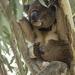 footloose by koalagardens