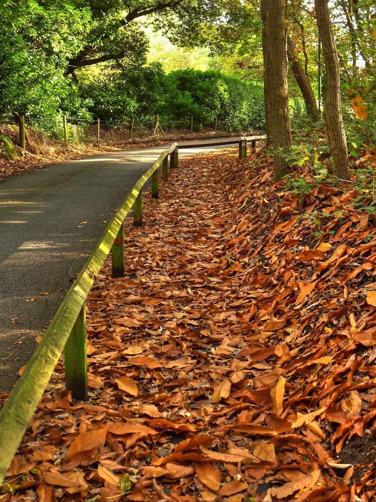 The last of the autumn colour by judithdeacon