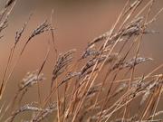 24th Nov 2019 - grasses