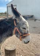 24th Nov 2019 - Pepe the donkey