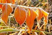 24th Nov 2019 - Outlined in Frost