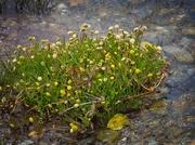 8th Nov 2019 - Sea flora in the stream