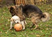 24th Nov 2019 - It's MY ball