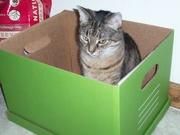 25th Nov 2019 - she really loves boxes