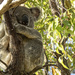 sleepy land by koalagardens