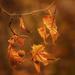 dancing leaves by jernst1779