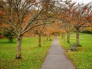 25th Nov 2019 - A walk in the Park