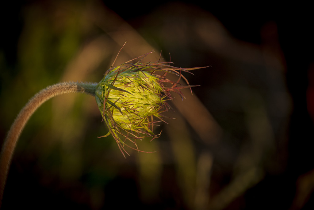 Hedgerow in Evening Light 4 by nickspicsnz