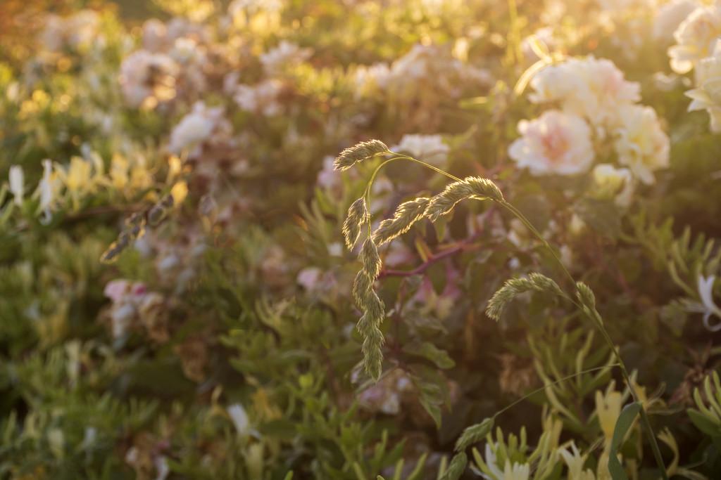 Hedgerow in Evening Light 1 by nickspicsnz