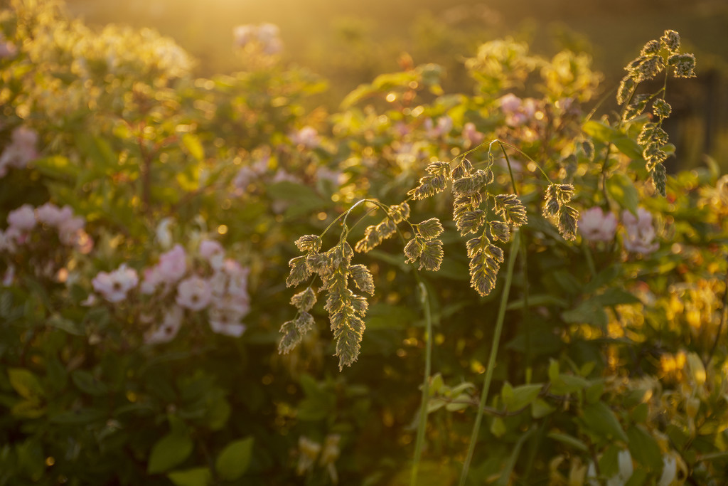 Hedgerow in Evening Light 3 by nickspicsnz