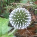 Winter flower head