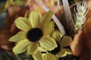 26th Nov 2019 - Fall flowers