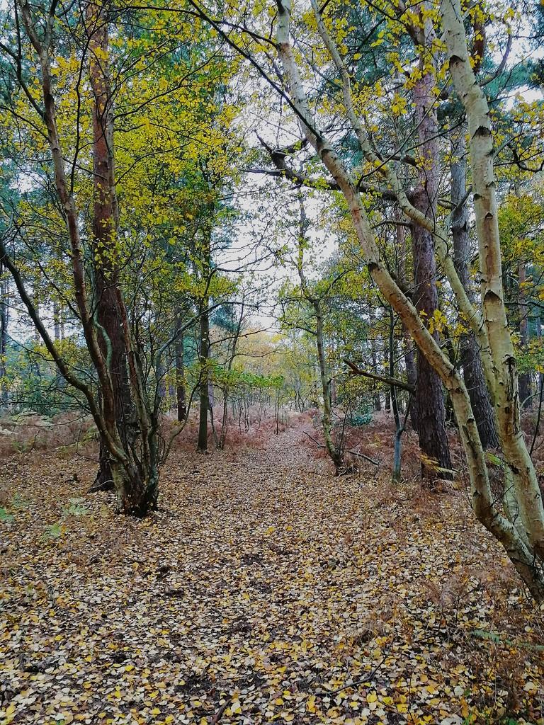 Walk in the Woods by ilovelenses
