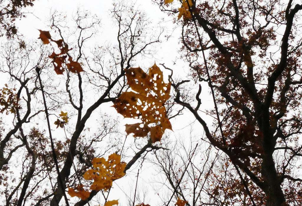 leaves and branches by marijbar