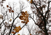 26th Nov 2019 - leaves and branches