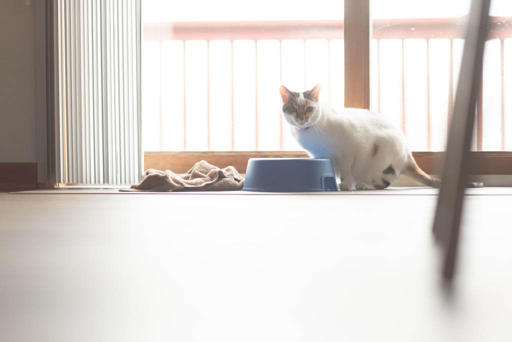 contre-jour cat by jackies365