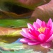 Another Waterlily by ludwigsdiana