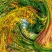 Autumn Palette by carolmw