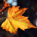 Late Fall Showoff by seattlite