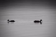 5th Nov 2019 - A pair of ripples