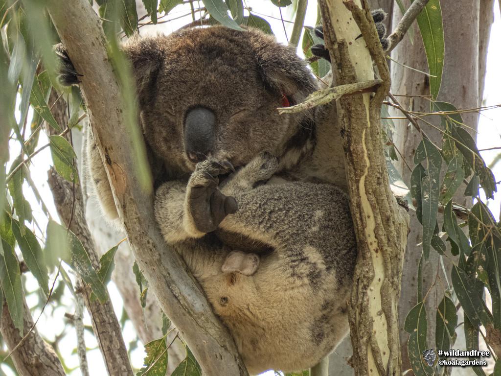 when you've got it, flaunt it by koalagardens
