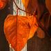 Bright Orange by mzzhope