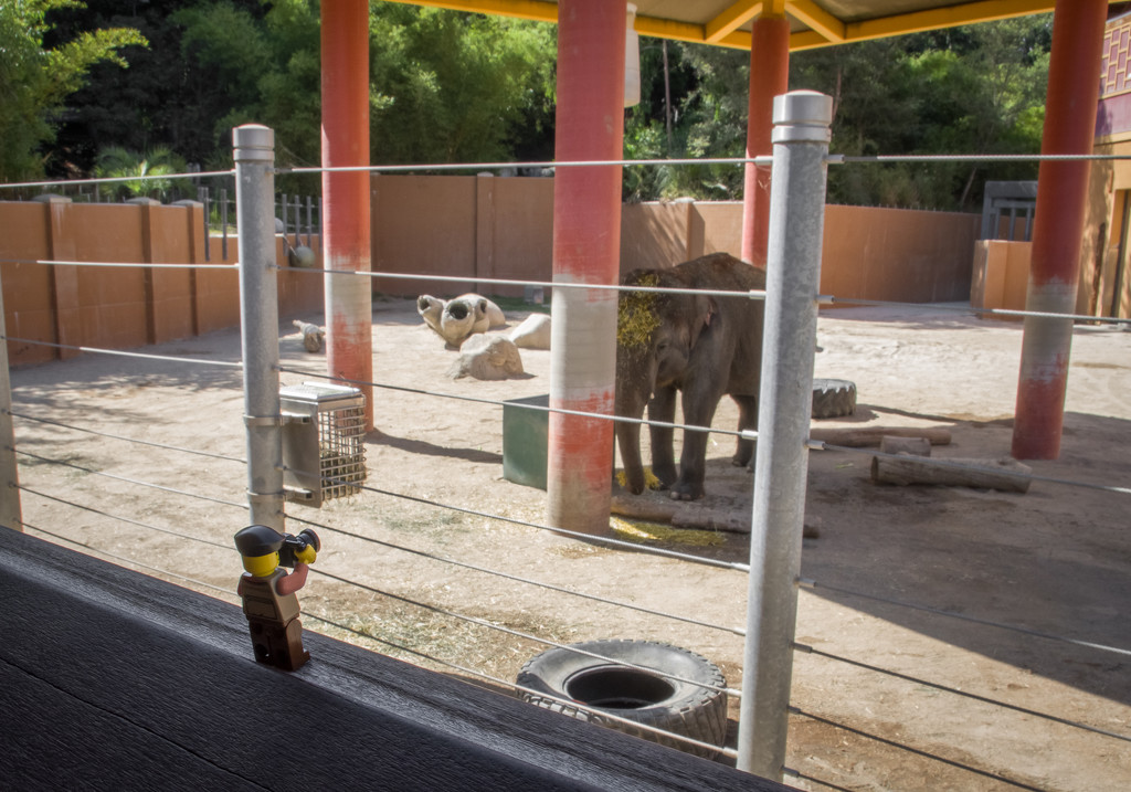 (Day 287) - Lunch with an Elephant by cjphoto