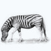 there is a zebra on my stoep by mv_wolfie