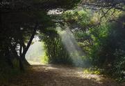 28th Nov 2019 - Sun Rays On the Trail