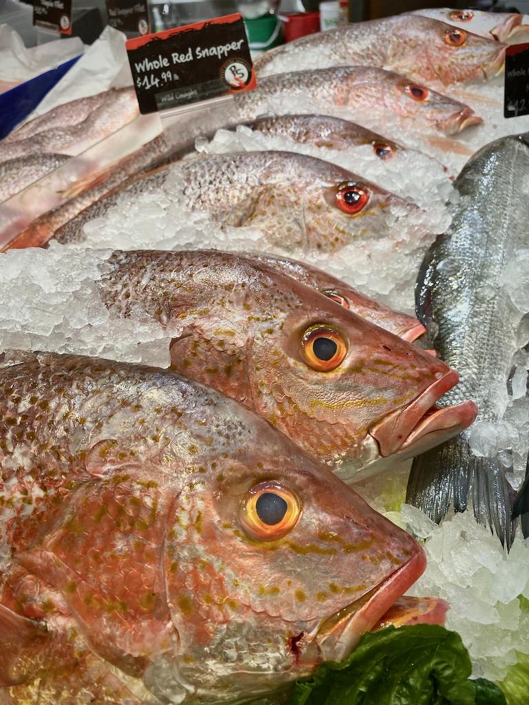 Fish for Sale by jyokota