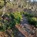 Wintry Hike