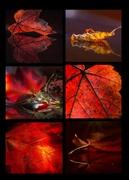 28th Nov 2019 - Leaf Light