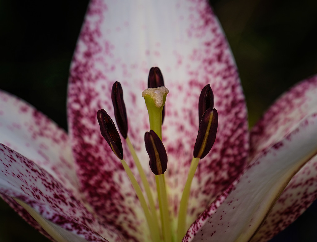 Free flowers by maureenpp