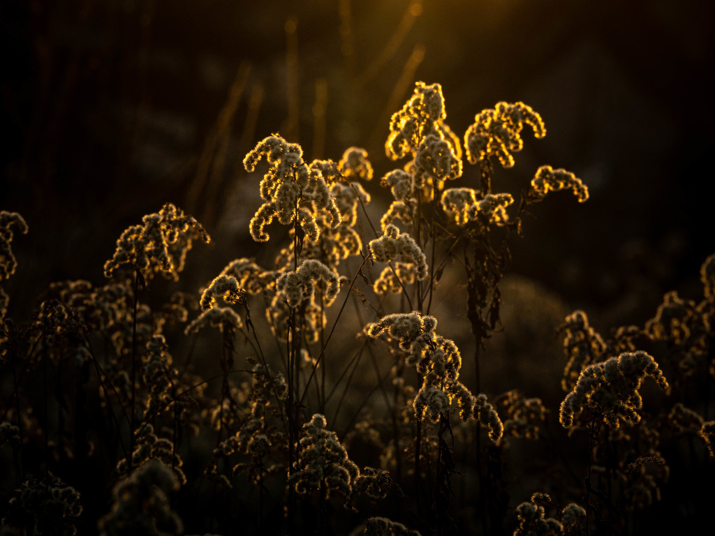 In the last rays of the sun by haskar
