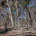 Homage to a dry forest