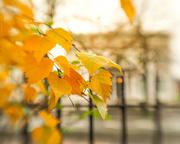 28th Nov 2019 - orb, railings, leaves