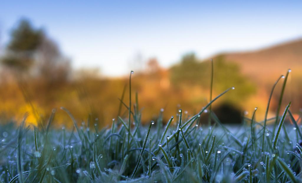 Frosty morning by peadar