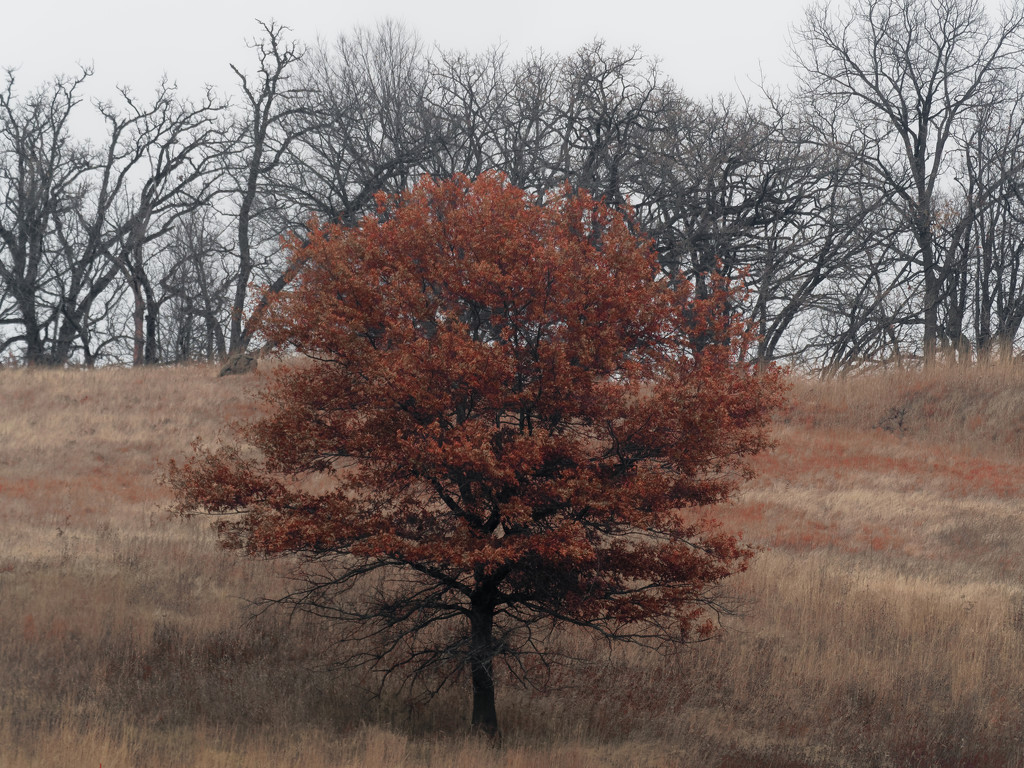 tree landscape by rminer