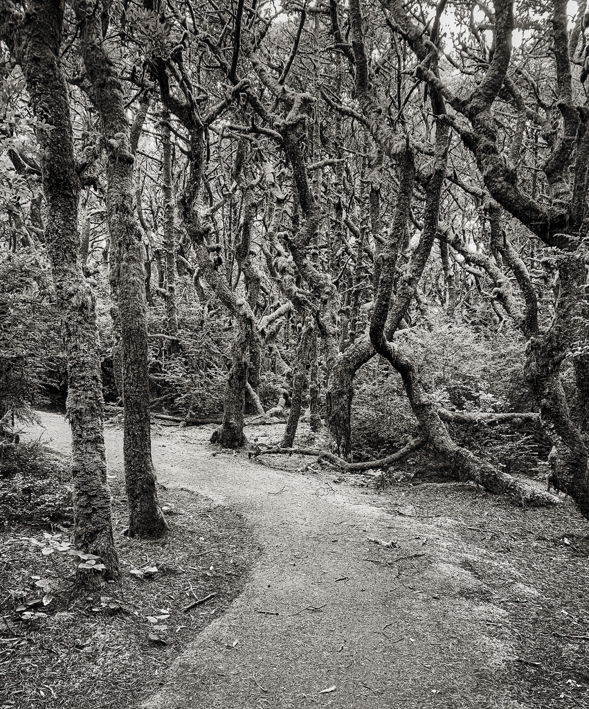 Washburn Trees  by jgpittenger