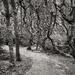 Washburn Trees