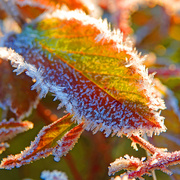 29th Nov 2019 - Frost Has a Beauty of Its Own