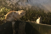 27th Nov 2019 - Street cats